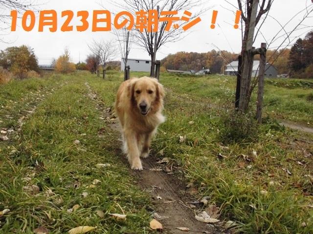CIMG2700_P.jpg
