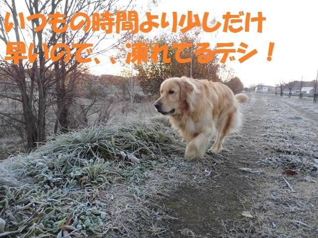 CIMG2733_P.jpg
