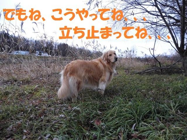 CIMG2782_P.jpg