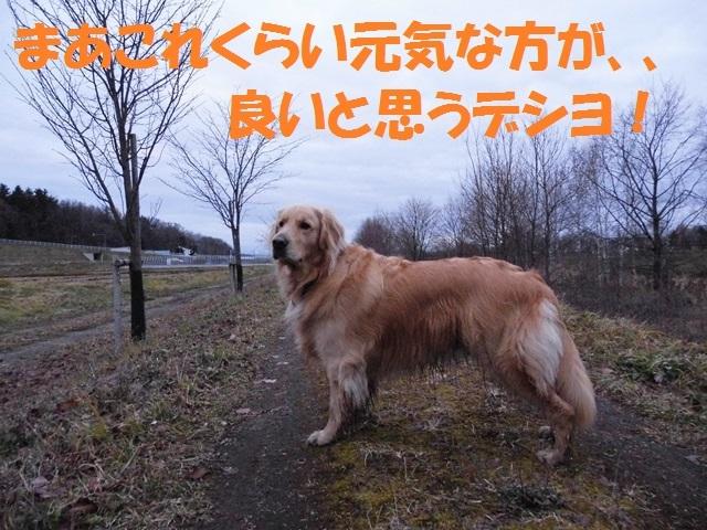 CIMG2793_P.jpg