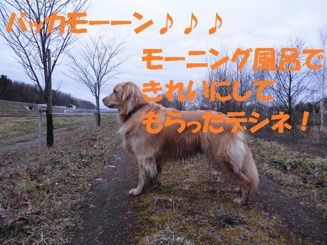 CIMG2794_P.jpg