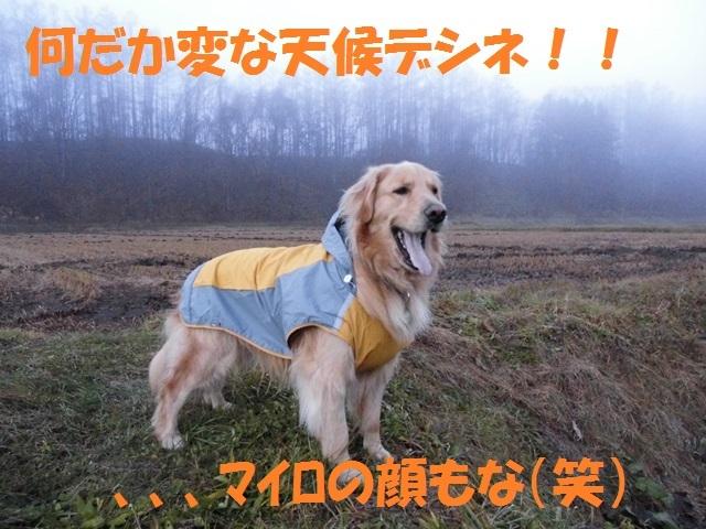 CIMG2798_P.jpg