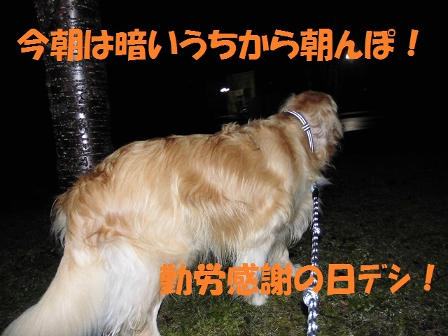 CIMG2836_P.jpg