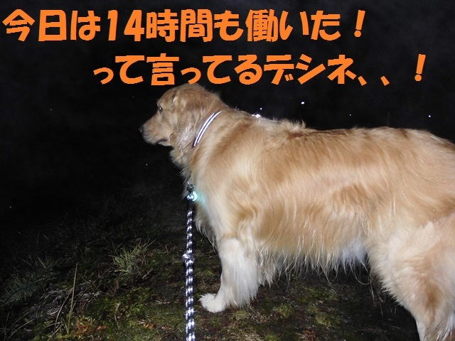 CIMG2838_P.jpg