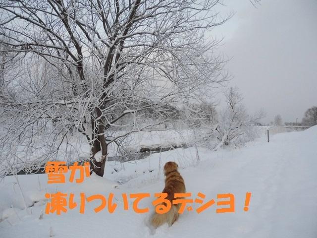 CIMG3010_P.jpg