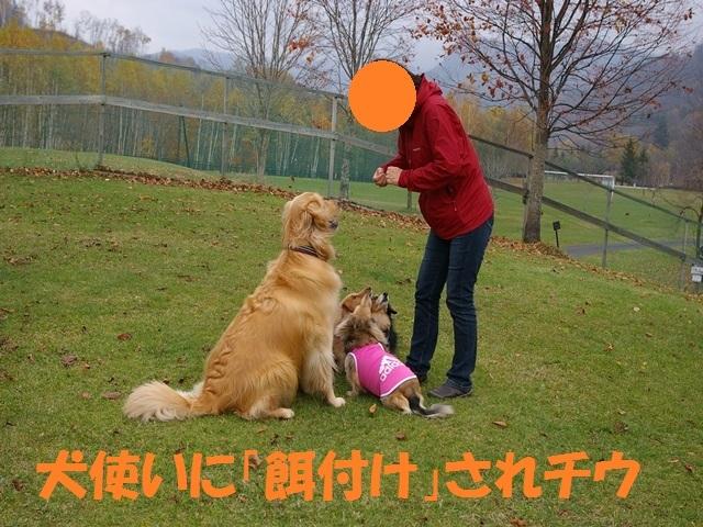 IMGP2397_P.jpg