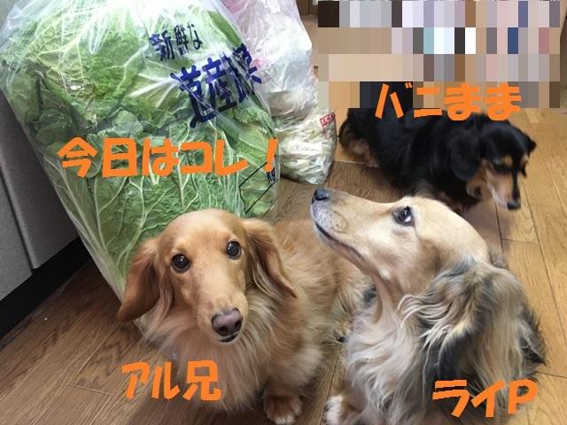 IMG_6944_P.jpg