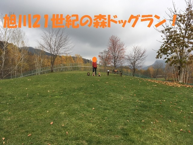 IMG_6952_P.jpg