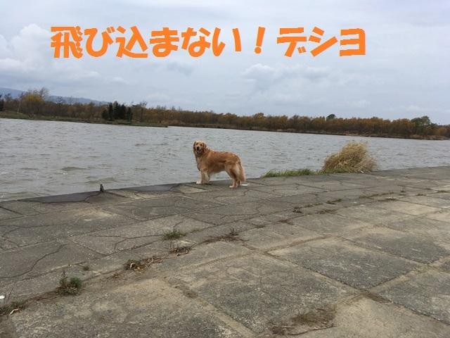 IMG_7031_P.jpg