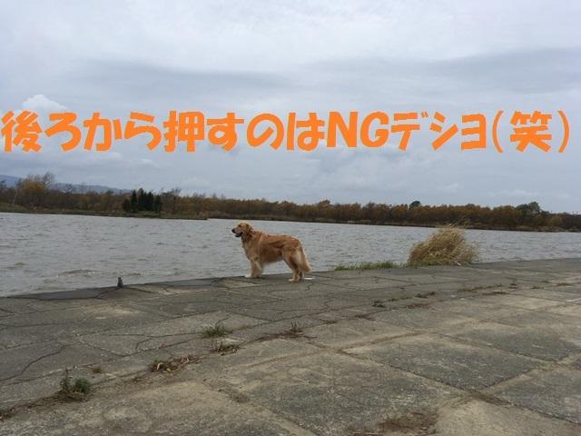 IMG_7032_P.jpg