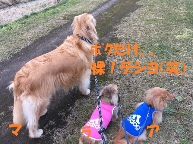 IMG_7166_P.jpg