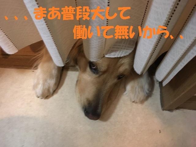 IMG_7172_P.jpg