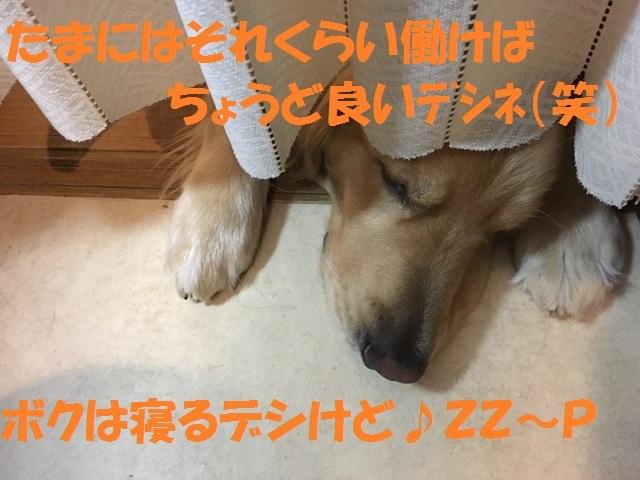 IMG_7173_P.jpg
