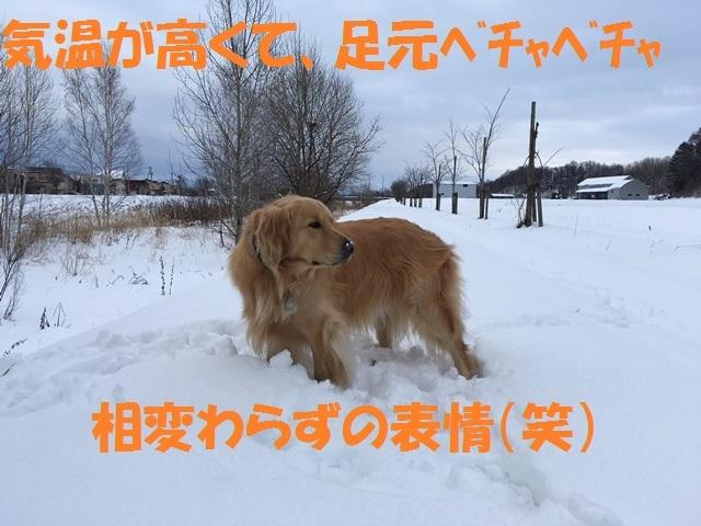 IMG_7287_P.jpg