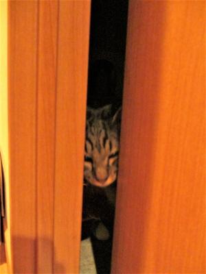 ドアの隙間に張り付くレム