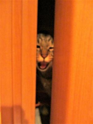 ドアの隙間で騒ぐレム