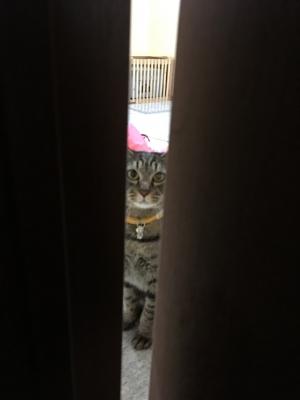 Iさんとドアの隙間のレム