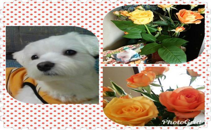 PhotoGrid_1506822192493_convert_20171001111839.jpg