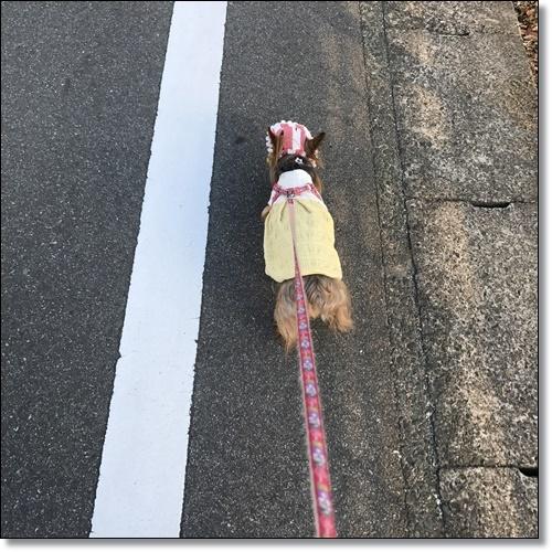 洋服IMG_1584-20170927