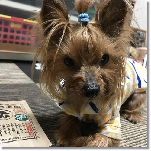 chieちゃんIMG_1824-20171012