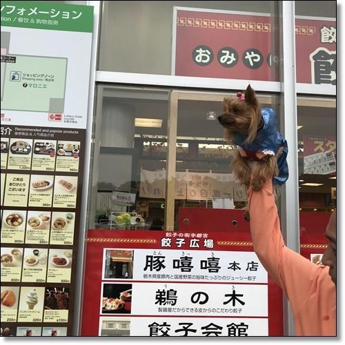 芋煮会にGOIMG_1826-20171017
