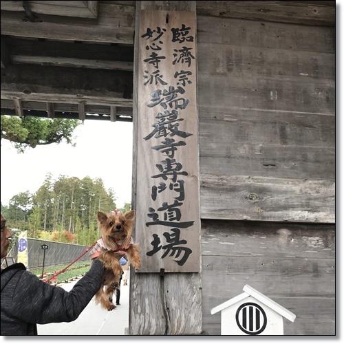芋煮会にGOIMG_1845-20171017