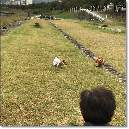 芋煮会にGOIMG_1965-20171017