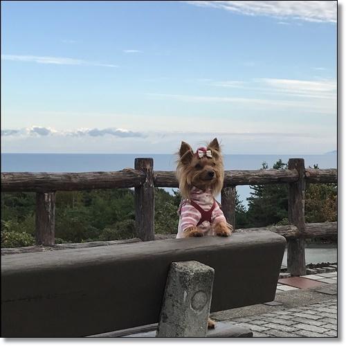 芋煮会にGOIMG_2104-20171017