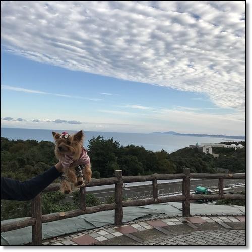 芋煮会にGOIMG_2108-20171017
