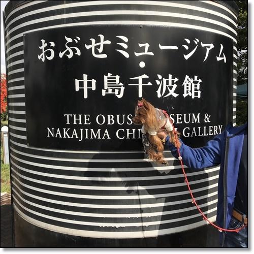 芋煮会にGOIMG_2117-20171017