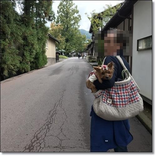 芋煮会にGOIMG_2132-20171017