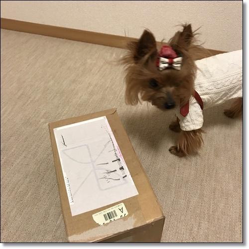 芋煮会にGOIMG_2143-20171017