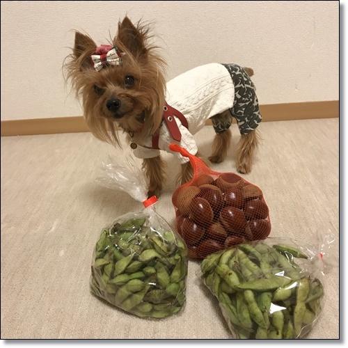 芋煮会にGOIMG_2145-20171017