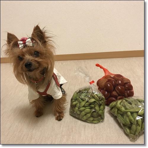 芋煮会にGOIMG_2146-20171017