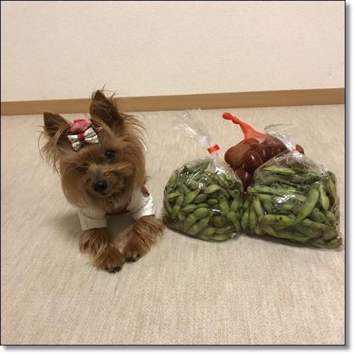 芋煮会にGOIMG_2148-20171017