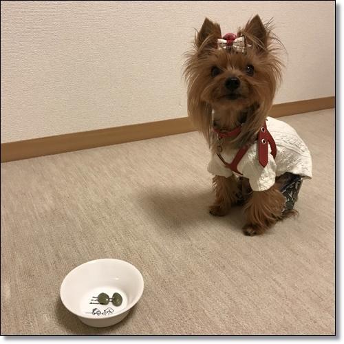 芋煮会にGOIMG_2149-20171017