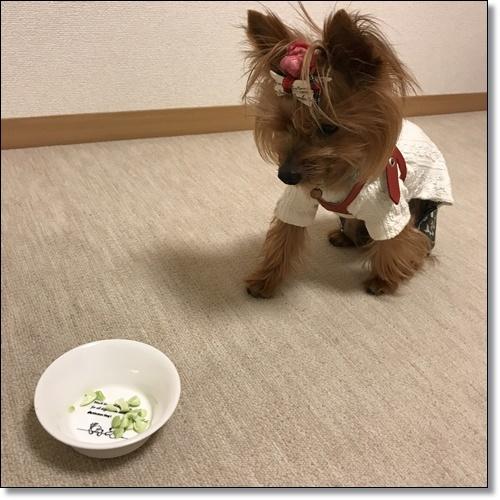 芋煮会にGOIMG_2151-20171017