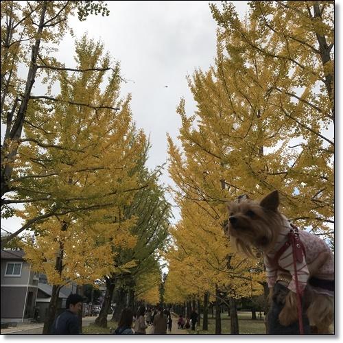 紅葉IMG_2498-20171111