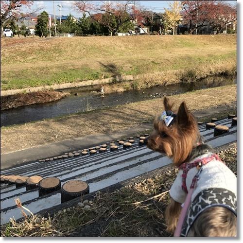 散歩IMG_2781-20171128