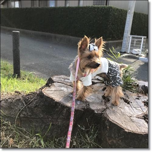散歩IMG_2784-20171128
