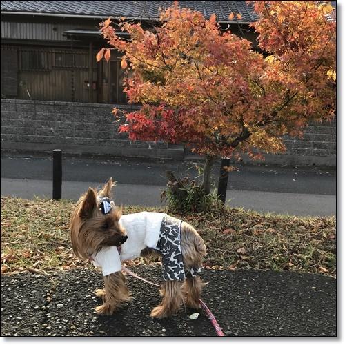 散歩IMG_2787-20171128