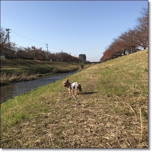 散歩IMG_2790-20171128