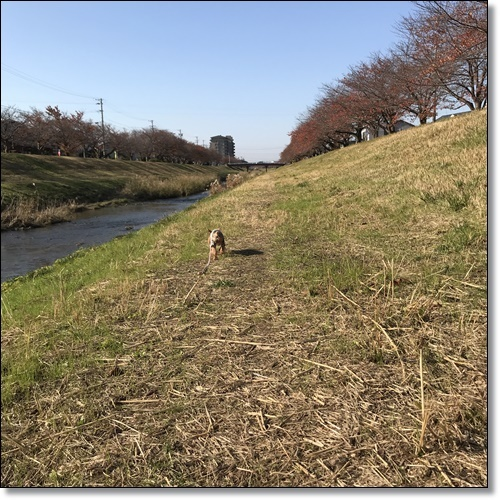散歩IMG_2791-20171128