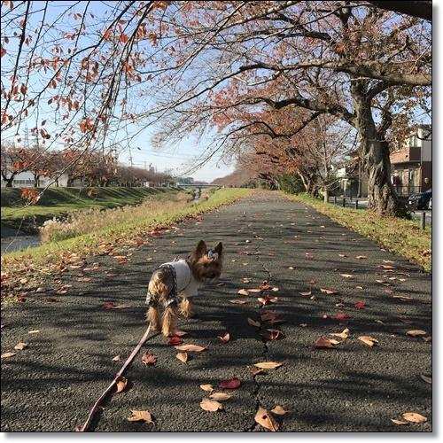 散歩IMG_2799-20171128