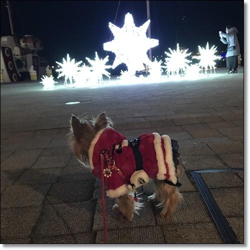 クリスマスIMG_2953-20171209