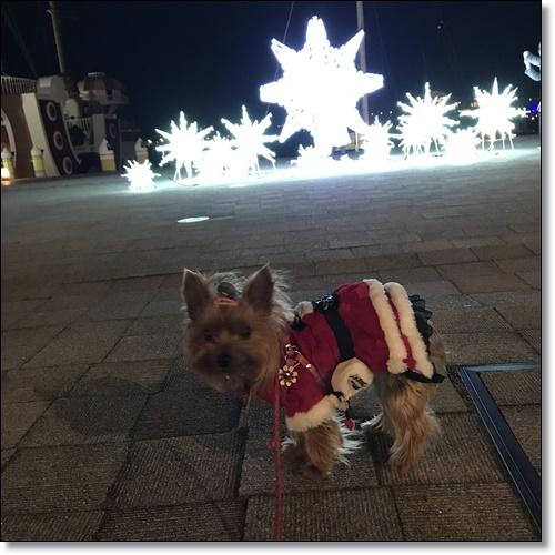 クリスマスIMG_2954-20171209