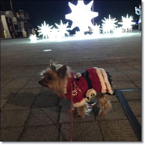 クリスマスIMG_2955-20171209