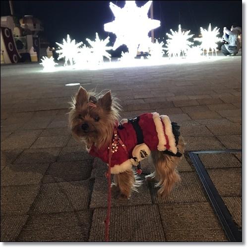 クリスマスIMG_2956-20171209