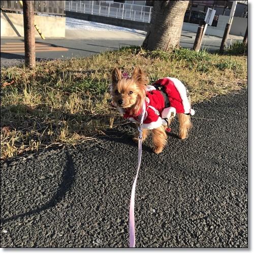 散歩IMG_3170-20171220