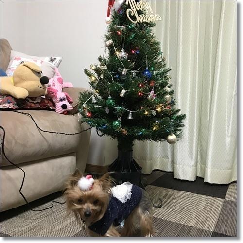 クリスマスIMG_3241-20171224